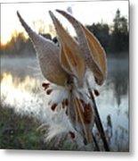 Milkweed Pods Seeds Metal Print