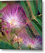 Mimosa's First Blooms Metal Print