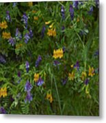 Mimulus And Vetch Metal Print