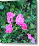 Mini Roses Metal Print