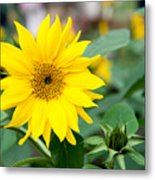 Mini Sunflower And Bud Metal Print