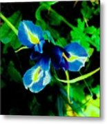 Miniature Blue Iris Metal Print