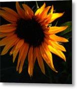 Miniature Sunflower Metal Print