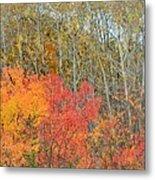 Minnesota Autumn 55 Metal Print
