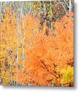 Minnesota Autumn 58 Metal Print