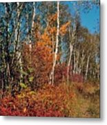 Minnesota  Autumn Path Metal Print