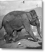 Minnie The Elephant, 1920s Metal Print