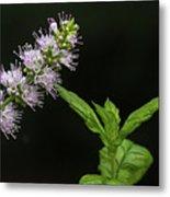 Mint Flower Metal Print
