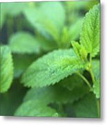 Mint Mood Metal Print