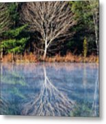 Mirror Mirror On The Pond Metal Print