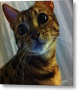 Mischievous Bengal Cat Metal Print