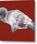 Mischievous Bird Metal Print