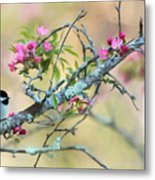 Miss Chickadee Metal Print