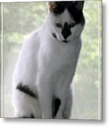 Miss Jerrie Cat With Watercolor Effect Metal Print