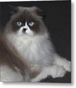 Miss Lillie The Kitty Metal Print