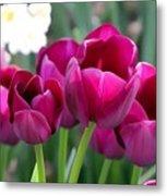 Miss Tulip Metal Print