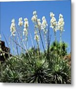 Mission Yuccas Metal Print