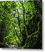 Missisquoi River In Vermont - 1 Metal Print