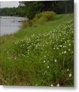 Mississippi River Bank Flowers Metal Print