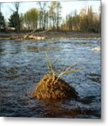 Mississippi River Grass On A Rock Metal Print