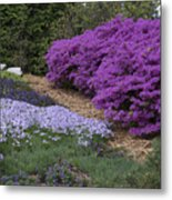 Missouri Botanical Garden Purple Azaleas Dsc01692 Metal Print