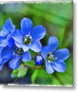 Missouri Wildflowers 5  - Polemonium Reptans -  Digital Paint 1 Metal Print