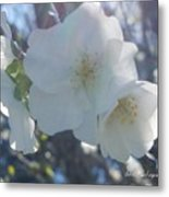 Misty Cherry Blossoms Metal Print