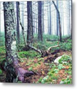 Misty Forest Gaudineer Scenic Area Metal Print