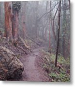 Cloud Forest- Mount Sutro Metal Print
