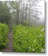 Misty Morning Cranberry Glades Metal Print