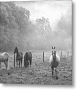 Misty Morning Horses Metal Print