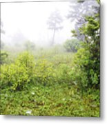 Misty Morning In The Glades Metal Print