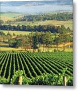 Misty Morning In Yarra Valley Vineyards Near Healesville, Victoria, Australia Metal Print