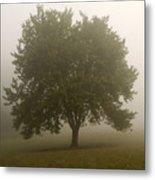 Misty Morning Tree Metal Print