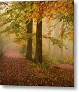 Misty Pathways  Metal Print