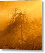 Misty Swamp Sunrise Metal Print