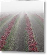 Misty Tulip Fields IIi Metal Print