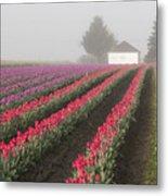 Misty Tulip Fields Iv Metal Print