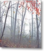 Misty Woodland Showing The Last Fall Color Metal Print