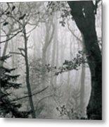 Misty Woods, Juniper Metal Print