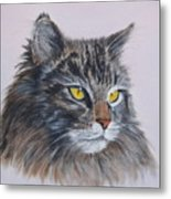 Mitze Maine Coon Cat Metal Print