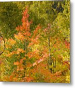 Mixed Autumn Metal Print