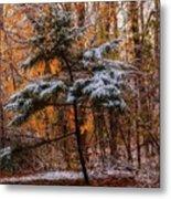 Mixed Seasons Metal Print