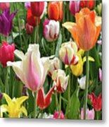 Mixed Tulips Metal Print