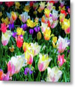 Mixed Tulips In Bloom  Metal Print