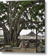 Moana Surfrider Banyan Court - Waikiki Beach Metal Print
