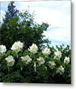 Mock Orange Blossoms Metal Print