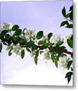 Mock Orange Metal Print