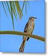 Mockingbird In A Palm Tree Metal Print