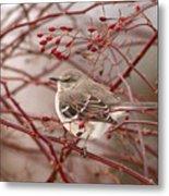 Mockingbird In Winter Rose Bush Metal Print